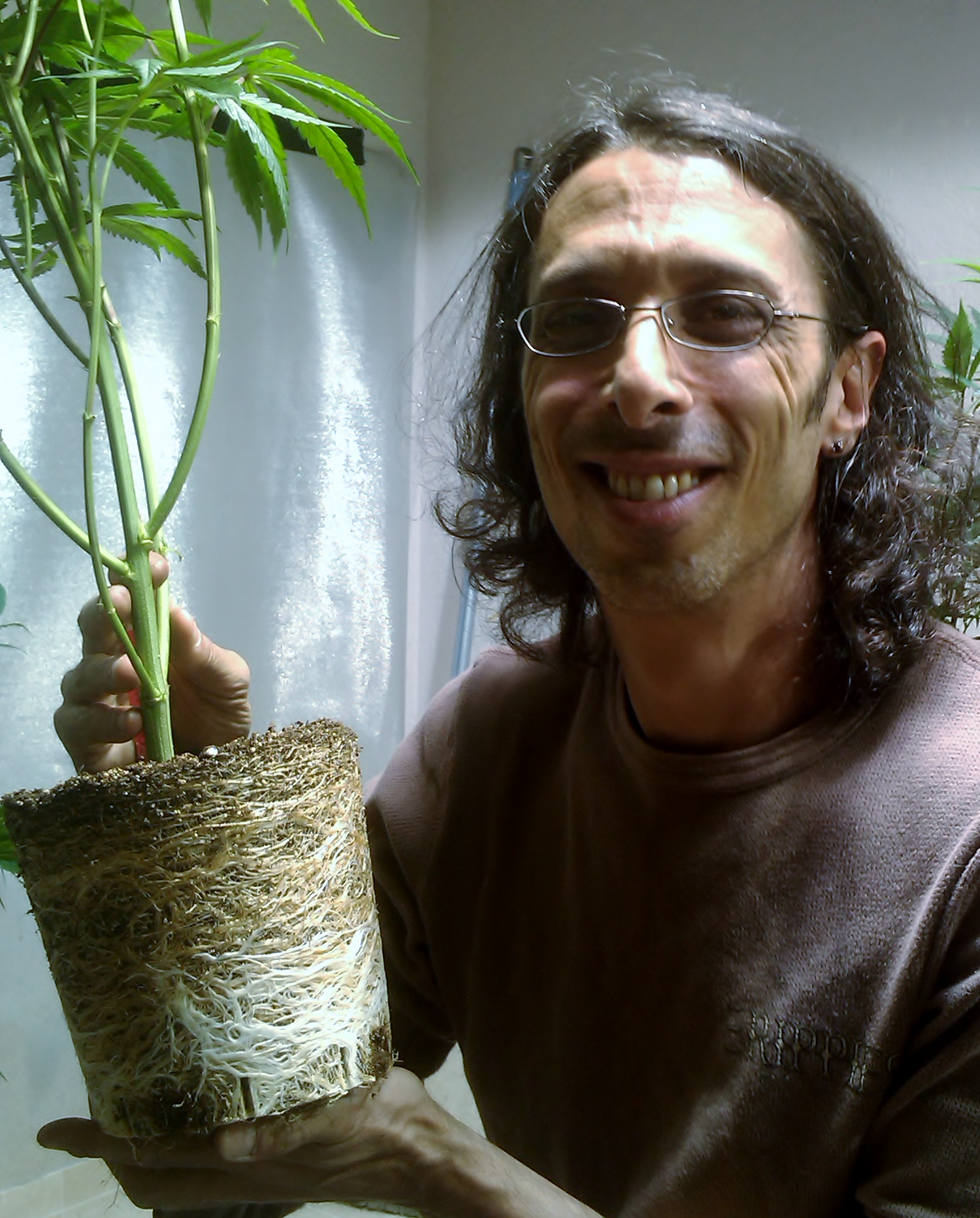 5q315-Great-Roots.jpg
