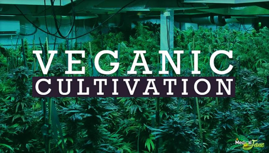 veganiccultivation1-650x3711