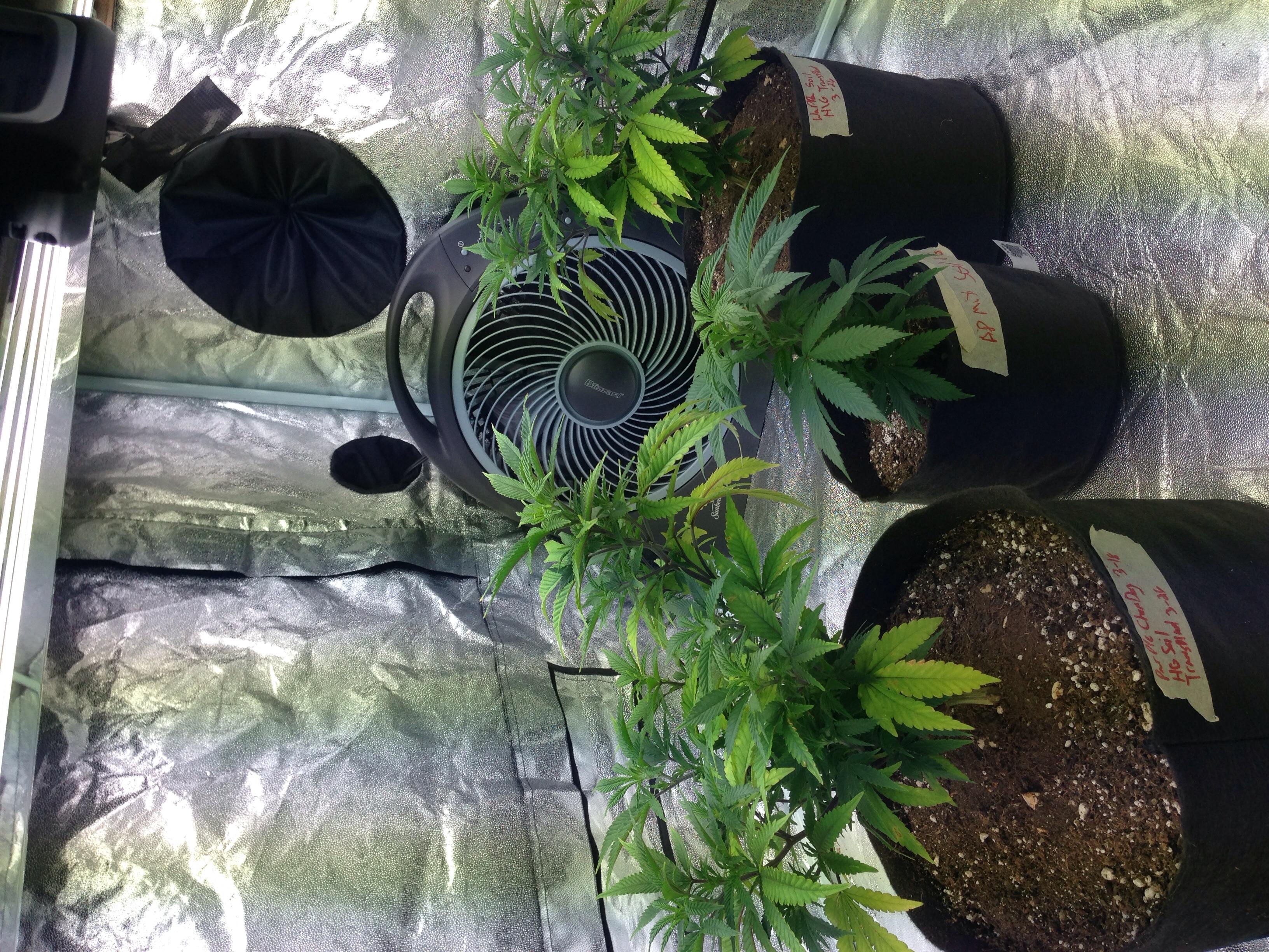 how to become a medical marijuana grower